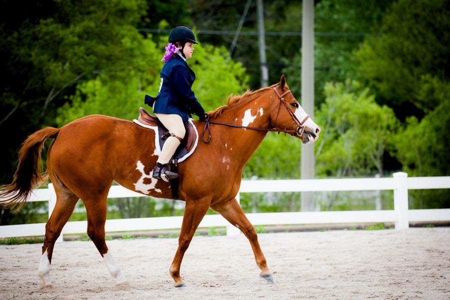 HorseShowSmall-1